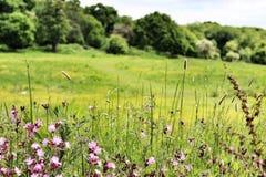 Eppingsbos in de zon Royalty-vrije Stock Afbeeldingen