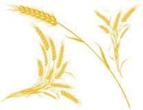 eps文件设计麦子 库存照片