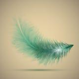 8 eps羽毛例证向量 免版税库存图片