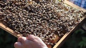 eps 8 πρόσθετος μελισσών κυψελωτός εικονογράφος μορφής φιλμ μικρού μήκους