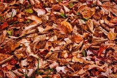 eps ανασκόπησης 8 φθινοπώρου το αρχείο περιέλαβε τα φύλλα στοκ φωτογραφία