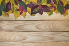 8 eps ανασκόπησης φθινοπώρου χρωματισμένα χαρτόνι συμπεριλαμβανόμενα αρχείο φύλλα ξύλινα Στοκ Φωτογραφίες