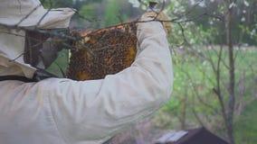 eps 8 πρόσθετος μελισσών κυψελωτός εικονογράφος μορφής Ο μελισσοκόμος συγκομιδών μελιού απομακρύνει ήπια τις μέλισσες από το πλαί φιλμ μικρού μήκους
