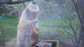 eps 8 πρόσθετος μελισσών κυψελωτός εικονογράφος μορφής Ο μελισσοκόμος συγκομιδών μελιού απομακρύνει ήπια τις μέλισσες από το πλαί απόθεμα βίντεο
