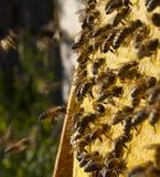 eps 8 πρόσθετος μελισσών κυψελωτός εικονογράφος μορφής Στοκ εικόνα με δικαίωμα ελεύθερης χρήσης