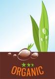 eps органический Бесплатная Иллюстрация