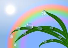 EPS10传染媒介露水日出和新鲜的满地露水的草。 免版税库存照片