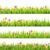 Πράσινη χλόη και όμορφα λουλούδια άνοιξη. EPS 10 Στοκ Φωτογραφία