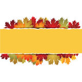 EPS10 Autumn maple leaves background. Vector Royalty Free Stock Images