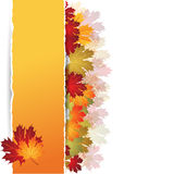 EPS10 Autumn maple leaves background. Vector Stock Photo