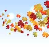 EPS10 Autumn maple leaves background. Vector Royalty Free Stock Photo