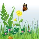 eps blommar krypängen