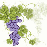 EPS10 Blue grapes Stock Photography