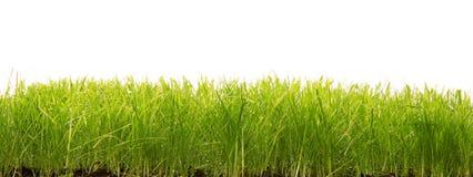 eps 8 formatu trawy green dodatkowa wyizolował v white wektor fotografia stock