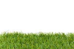 eps 8 formatu trawy green dodatkowa wyizolował v white wektor Zdjęcie Stock