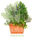 +EPS Herbes de Provence dans le planteur de terre cuite Images libres de droits