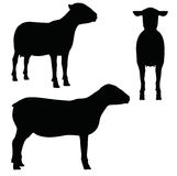 EPS 10  illustration of Sheep on white background Stock Images