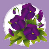 EPS+JPG, Pansies roxos Fotos de Stock Royalty Free