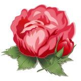 +EPS Rose et bourgeon rouges Photo stock