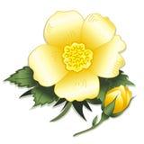+EPS Rose y brote amarillos salvajes stock de ilustración