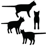 EPS 10 vector illustration of cat on white background Royalty Free Stock Image