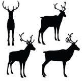 EPS 10 vector illustration of Reindeer on white background. Illustration -  EPS 10 vector illustration of Reindeer on white background Royalty Free Stock Photo
