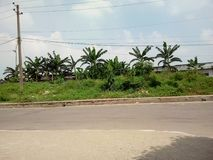 Epz de Adomgi Narayngong imagem de stock royalty free