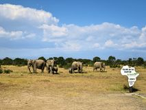 Equator in Kenya. Herd of elephants by the equator line in Kenya Royalty Free Stock Photos