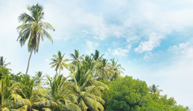 Equatorial forest Royalty Free Stock Photos