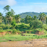 Equatorial forest near the river. Royalty Free Stock Photography