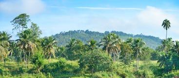 Equatorial forest Stock Photos