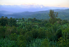 Equatorial jungle. Mountains covered with dense jungle. Africa, Stock Images