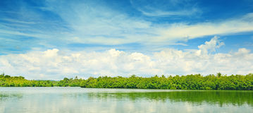 Equatorial mangroves Stock Photo