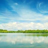 Equatorial mangroves Stock Images