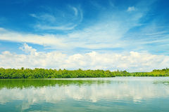 Equatorial mangroves Royalty Free Stock Photography