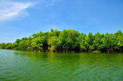 Equatorial mangroves in the lake Royalty Free Stock Photo