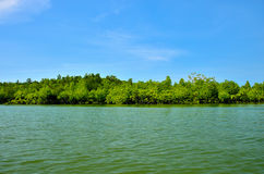 Equatorial mangroves in the lake Royalty Free Stock Image