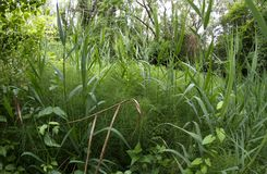 Equatorial tropical climate undergrowth with very ancient plants Royalty Free Stock Photo