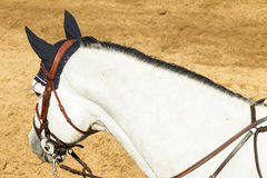 Equestrain Horse Neck Head Decor Royalty Free Stock Image