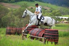 Equestre Fotografia de Stock
