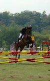 Equestre fotografia de stock royalty free