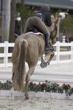 equestrian конкуренции стоковое фото