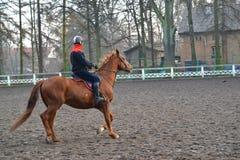 Equestrian сидит на лошади trakenensky породы Польша, Кен Стоковое Фото