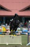equestrian zdjęcia stock