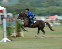 equestrian obraz royalty free