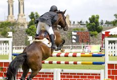 Equestrian. Image of an equestrian competitor in action Royalty Free Stock Photos