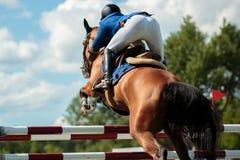 equestrian fotografie stock