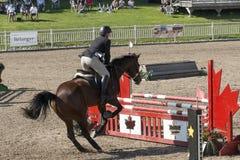 equestrian Immagine Stock