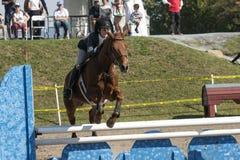 equestrian Imagens de Stock