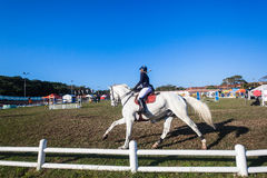 Equestrian Arena White Horse Woman  Royalty Free Stock Image
